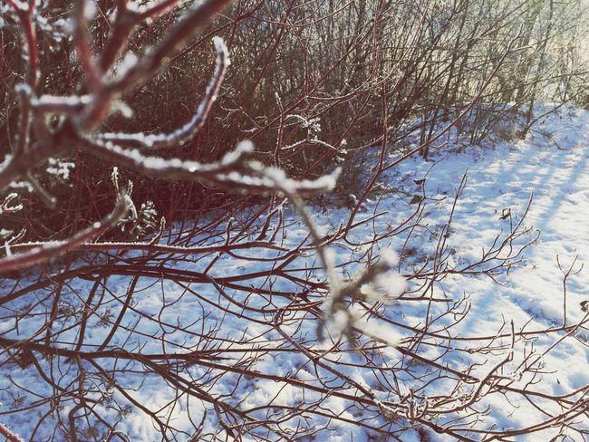 Morning Tranquil Scene Snow ❄ Nature Winter Winter Wonderland