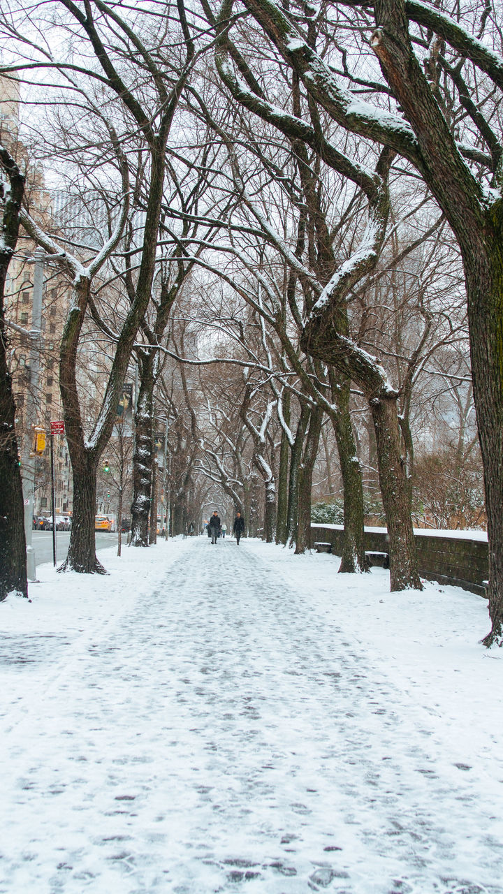 BARE TREES ON SNOW COVERED LANDSCAPE IN CITY