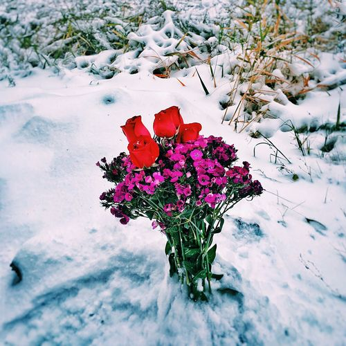 WINTER. Iphonephotography IPhoneography Colorful Showcase: November Nature RePicture Masculinity EyeEm Nature Lover How's The Weather Today? Fall Colors Nature_collection Love Flower Collection Flowers Enjoying Life Hello World Snow ❄ Snow Hello World Relaxing Winter Wintertime