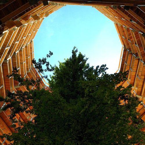 Baum. Hoch! Treetopwalk Tree Binz Ostsee Rügen Balticsea Theworldneedsmorespiralstaircases Treetop Rugia Spiralstair Ostseebad