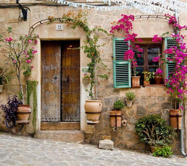 Door Plant
