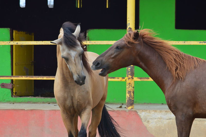 Mammal Livestock Horse Animal Domestic Animals Animal Themes Animal Wildlife Working Animal Pets