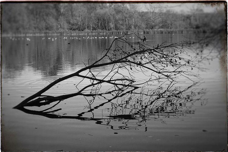 Bare tree at lakeshore