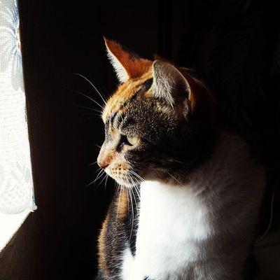 Catportrait Animals Deepthoughts