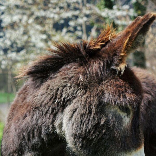 Donkey Donkeyshot Taking Photos Eye4photography  EyeEm Gallery SonyAlpha6000 EyeEm Best Shots Animals Animal Photography The Great Outdoors - 2016 EyeEm AwardsAnimal_collection Animalphotography
