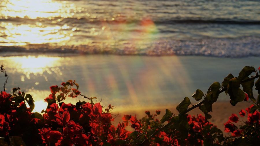 Water Beauty In Nature Plant Nature Tranquility Growth Lake Reflection Tranquil Scene Flower No People Flowering Plant Scenics - Nature Day Outdoors Sky Sunset Close-up Summer Springtime Sunlight Rainbow Lens Flare Dreamy Magical Magical Moments