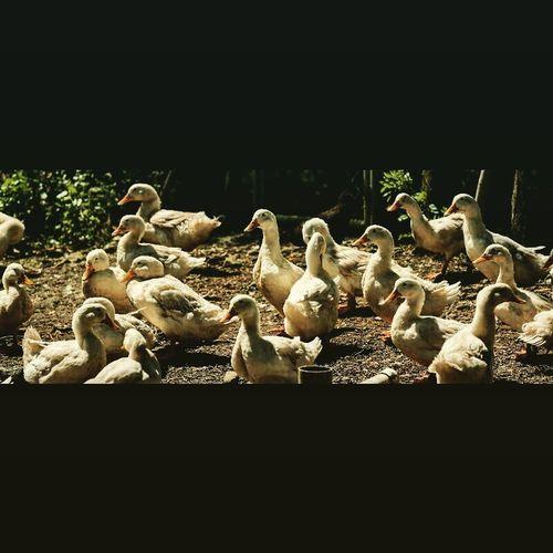 Nature_collection Nature Photography Panamá Naturelovers Nature