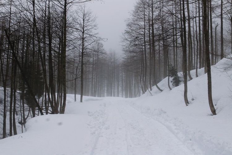 EyrEmNewHere Scenics Scenics - Nature Scenery Tree Snow Snowing Cold Temperature Winter Forest Polar Climate Mountain Frozen Pinaceae WoodLand Pine Woodland Woods Deep Snow Blizzard Powder Snow EyeEmNewHere Moments Of Happiness
