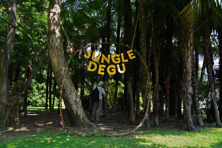 Parco Ciani Buskers Buskers Festival Jungle Degu Lost Autentic Moments