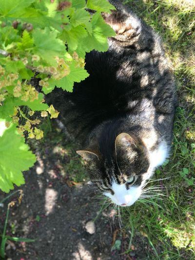 Cat garden sun hiding nature