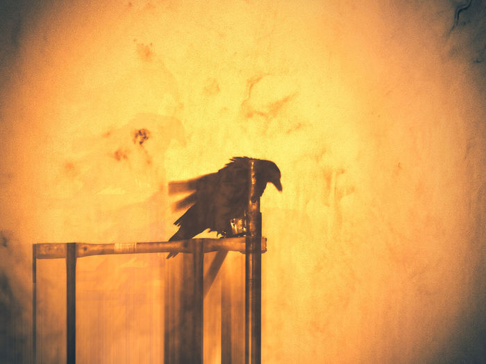 Day of the raven ArtWork Abstract Animal Animal Themes Animal Wildlife Animals In The Wild Art Auto Post Production Filter Bird Domestic Domestic Animals Heat Livestock Mammal Nature No People One Animal Outdoors Pets Raven - Bird Side View Silhouette Sky Sunset Vertebrate