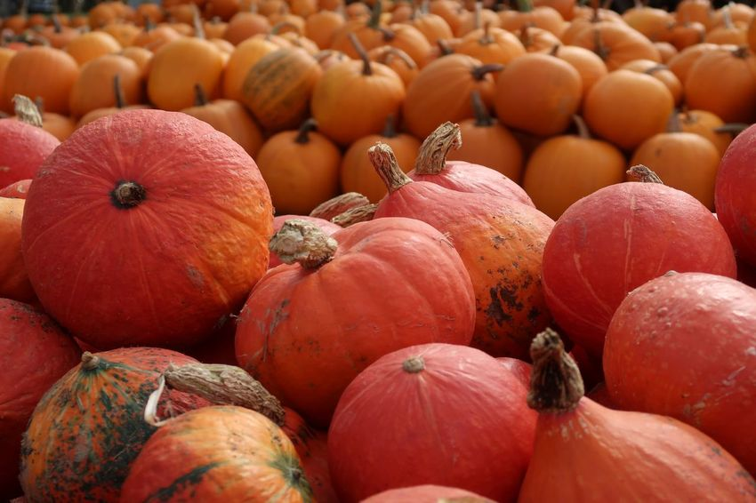 Halloween Kürbis Pumpkin Food And Drink Food Healthy Eating Wellbeing Freshness Market For Sale Large Group Of Objects Market Stall Full Frame Vegetable Pumpkin Day No People Close-up Still Life Abundance Backgrounds Retail  High Angle View