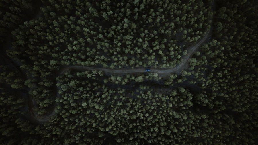 On the way No People Plant Nature Tree Beauty In Nature High Angle View Outdoors Adventure Jeep 4x4 Forest Forest Photography Drone  Dronephotography Way Nature Nature_collection Nature Photography Winter Tenerife EyeEmNewHere EyeEm Best Shots EyeEm Nature Lover EyeEm Gallery Canary Islands