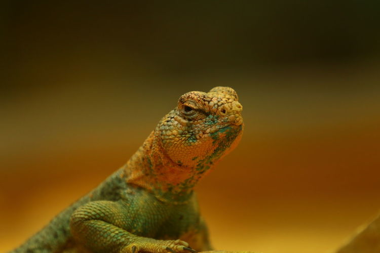 Close-up of lizard