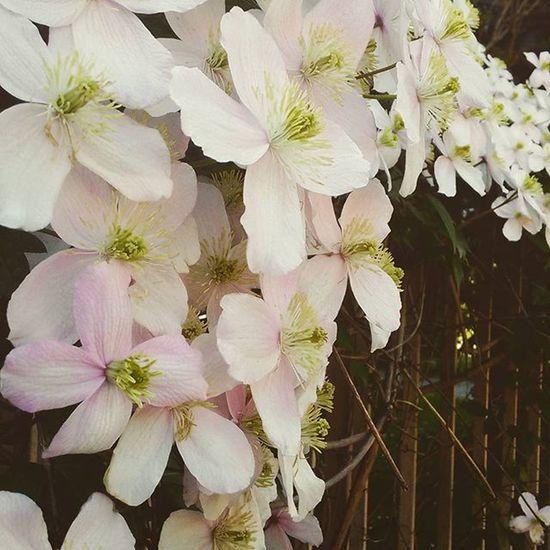 La natura non fa nulla di inutile Aristotele Natura Fiori Blossom Pink Rosa Profumo Primavera