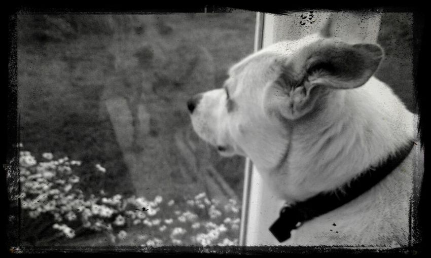 Escaping Outside Dog Life Longing