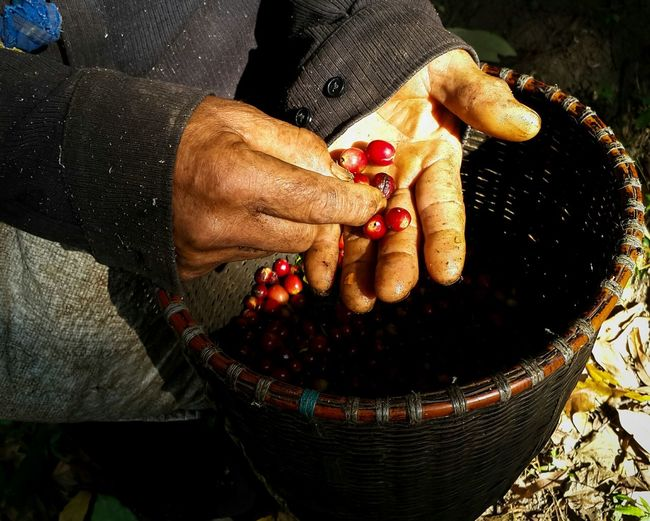 Coffee Beans Goodfelling Photograph CoffeeMan Arabika