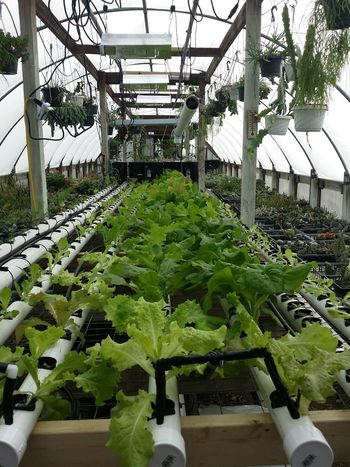 Freelance Life The Trials And Tribulations. In The Greenhouse Best Foot Forward Tranquility Hill Farm clifton springs ny