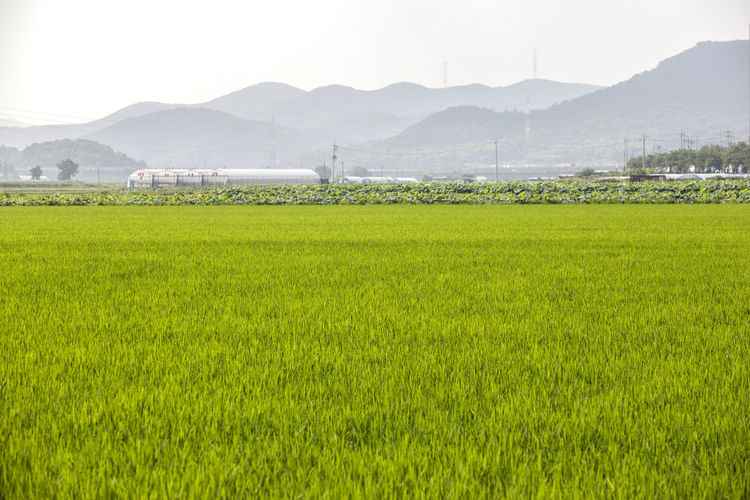 Scenic view of grassy field against mountains