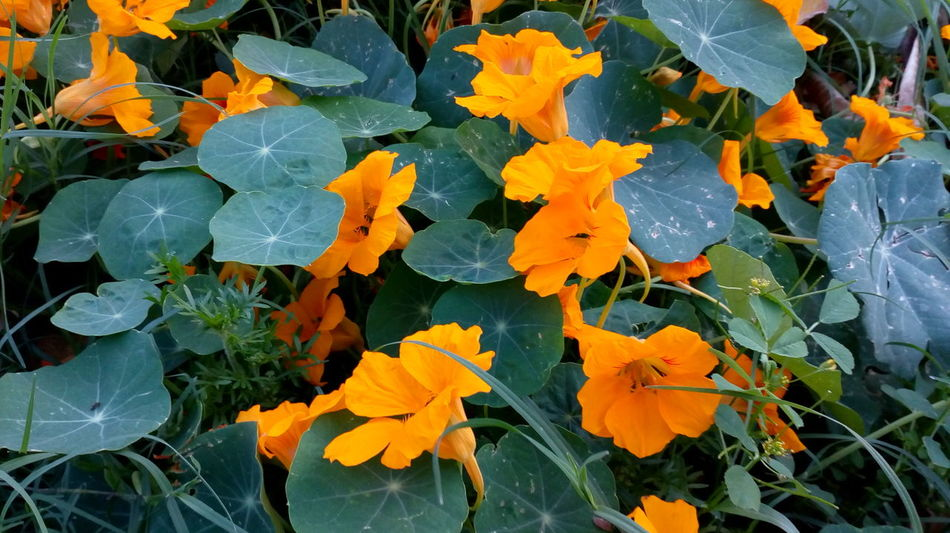 Flower Collection Autumn Leaf Plant No People Outdoors Change Close-up Leaves Nature Fragility Beauty In Nature Maple Leaf Nature No Edit/no Filter Beauty In Nature Orange Flower Many Flowers Petal_perfection Petals🌸 Green Color Green Green Green!  Beatiful Nature