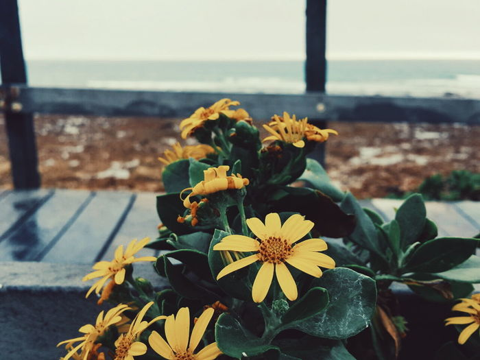 Justshoot Vscogrid El_herve LifeinPE Landscapes Colour Vscocam Nature Explore Flowers Yellow Flower