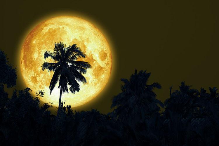 Full sturgeon moon and silhouette coconut tree in the dark night sky,