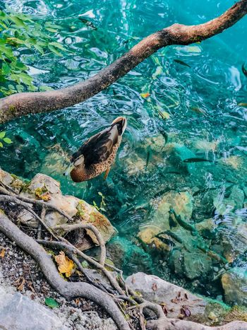Water Animal Wildlife Animals In The Wild Animal Animal Themes Vertebrate Sea Nature Bird Fish Outdoors Beauty In Nature