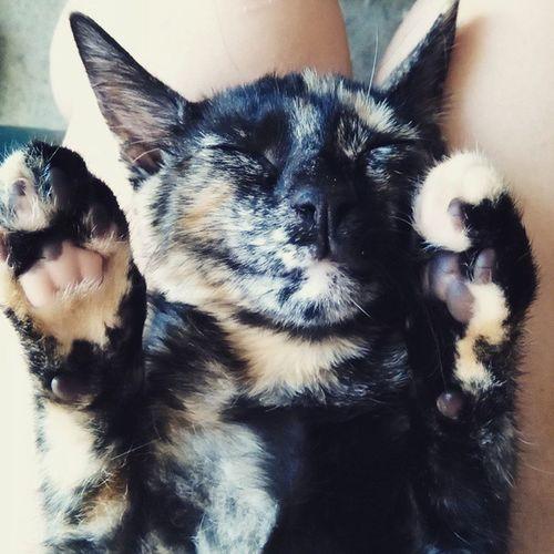 Sleepy Holly Catsofinsta Kittensonly Kittensofinstagram Catsofinstagram Cute Dailycat Dailykitten Kittenfeatures Kitten_features Catfeatures Cat_features Catsrule Catobessed Catlady