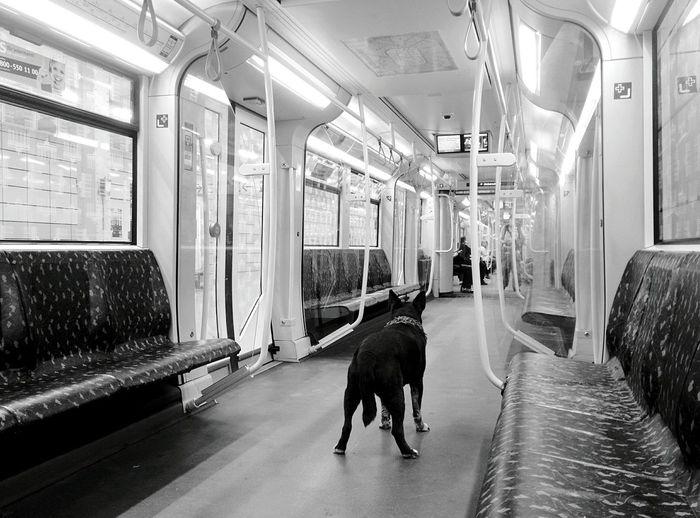 Day 335 - The scarf dog Berlin Blackandwhite Streetphotography Streetphoto_bw Public Transportation Monochrome Photography Ubahn U5 Dog 365project 365florianmski Day335