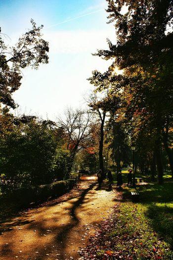 Autumn Autumn Colors Colors Of Autumn Colorful At The Park Park Walking Around Sundayafternoon