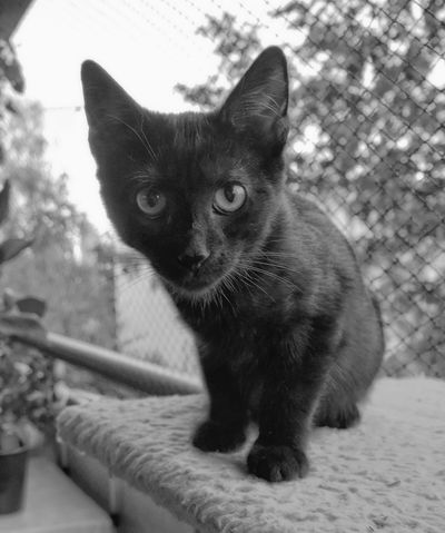 Hera, the black cat Black Cats Are Beautiful Animal Eye Black And White Black And White Photography Black Cat Photography Cat Feline Looking Away No People One Animal Pets Portrait