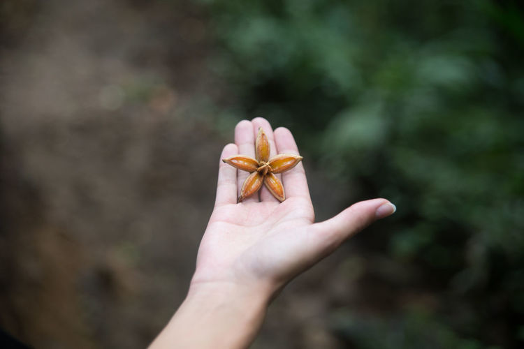 Cropped image of person holding star shaped flower
