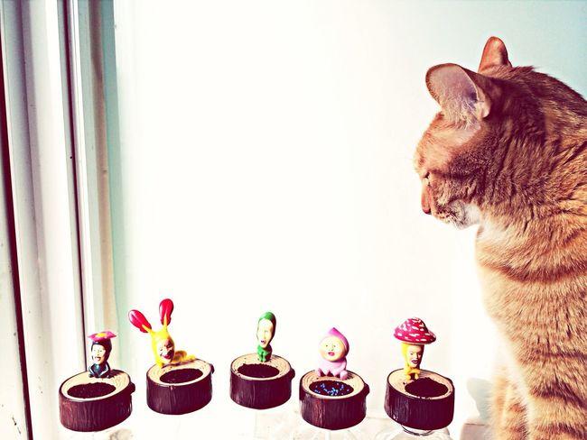 Cat Kobito