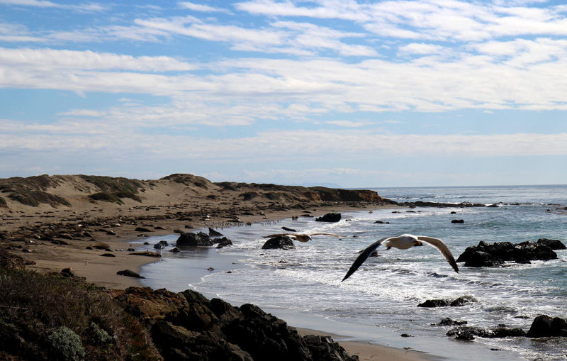 San Simeon Animal Themes Animals In The Wild Beauty In Nature Bird Cloud - Sky Day Elephant Seals Horizon Over Water Large Group Of Animals Mammal Nature No People Outdoors Scenics Sea Sea Gulls Sky Water
