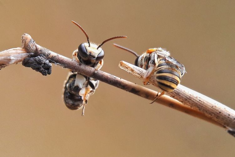 Close-up of honey bees on branch