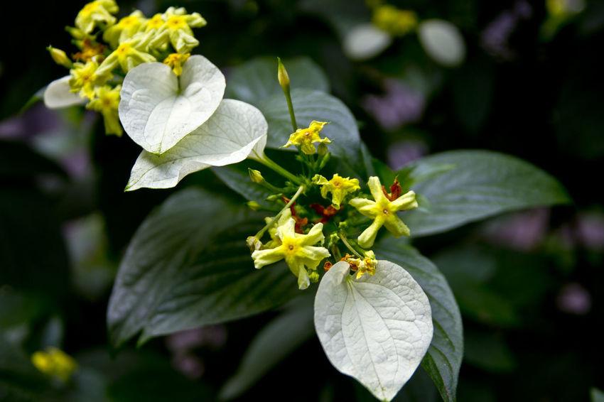 Flowers Flower Flowers,Plants & Garden Plants Colors Green Yellow Washington Arboretum