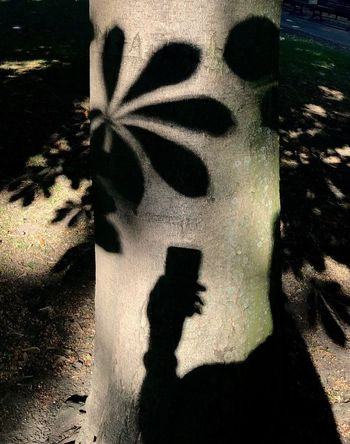 Mobilephotography Tree Light And Shadow Shadow Sunlight Focus On Shadow Nature Day Plant Outdoors