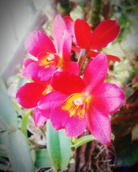 Enjoying Life MyFlowers Orchids Myhappiness💘 Relaxing House