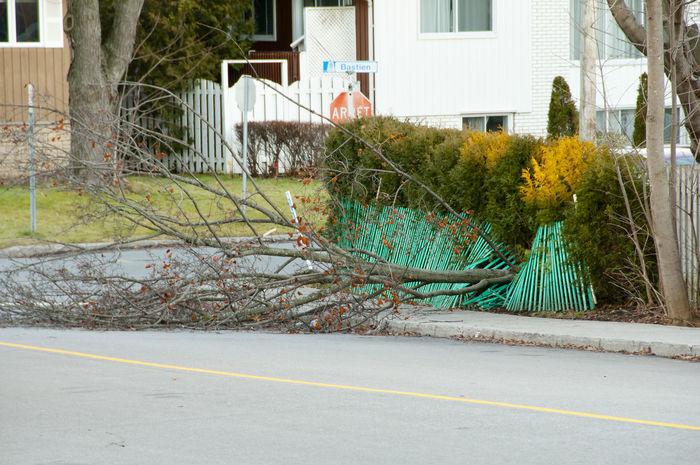 Windblown Fallen Tree Blown Fallen Tree Tree House Natural Disaster Road