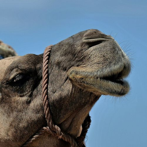 Nikond610 Taking Photos Check This Out Shoothemall Sexylips KissMe Moroccancamel Let_me_whisper_in_your_ear Duckface