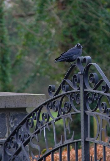 Close-up of a bird on metal fence
