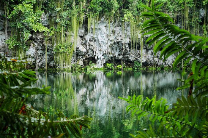 Los Tres Ojos. Lostresojos Stdomingo Water Reflection Beauty In Nature Nature Green Color Non-urban Scene