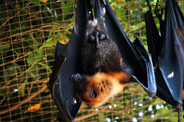 Close-up of bat hanging on a tree