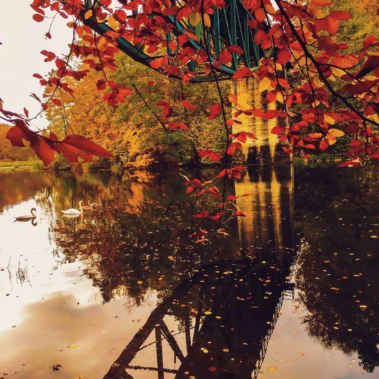 Autumn Colors EyeEm Nature Lover EyeEm Best Shots Landscape