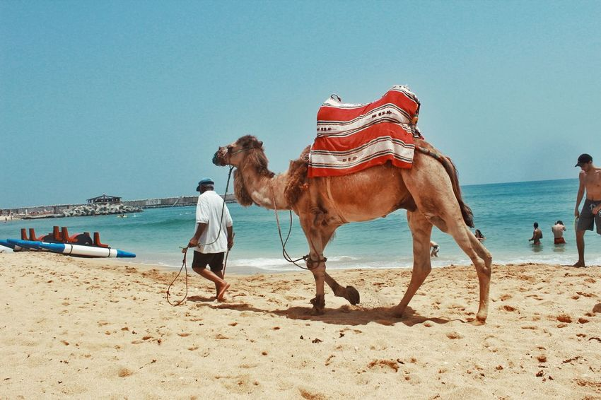 Morocco Welcome To Morocco Streetphotography Beachphotography Beach Camel Sahara Sand Sea Chameaux Chameau Fun Time Vacation People Of The Oceans