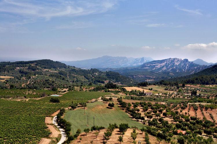 View from Horta St.Joan, Tarragona, Spain. Agriculture Beauty In Nature Blue Sky Fields Horizontal Landscape Landscape_Collection Mountain Mountain Range Outdoors Sunny Tarragona Tree Vinyards