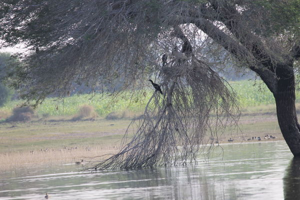 Tree Water Nature Tree Beauty In Nature Birdnest Birdwatching Bird Photography Waterfront Lakefront Rural Scene Portraiturephotography Beauty In Nature Beautiful Nature Nature Reflection Lake Landscape Bird Watching Finding New Frontiers