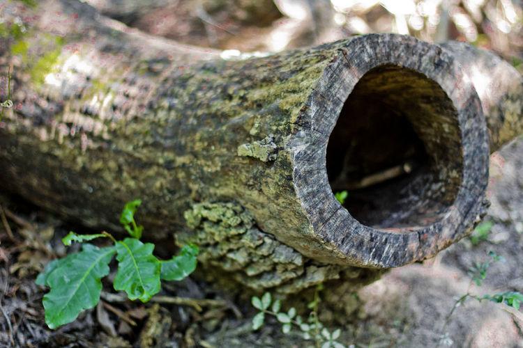 Close-up of hollow tree stump