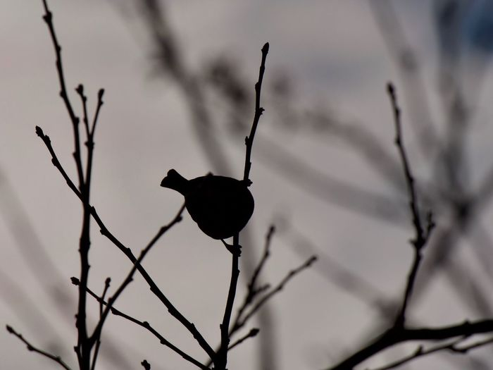 Bird Profile View Tree Shadow Animal Themes Calm City Day Light And Shadow