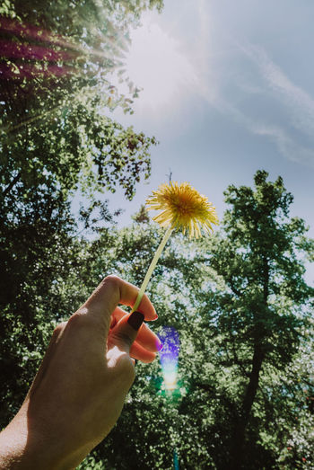 Person hand holding flower against trees and plants